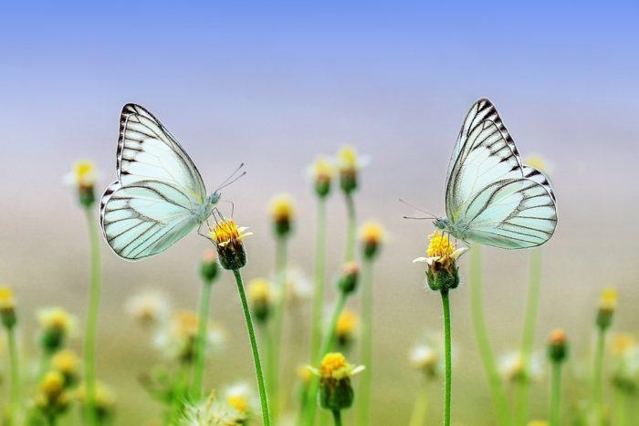butterfly-inversiones-sostenibles-efpa